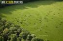 Elevage de bovins Bullion vue du ciel