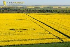 Champs de colza en Eure-et-Loir vue du ciel