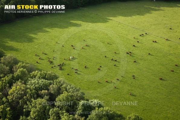 Photographie aérienne Elevage de bovin , commune de Bullion (78120),  département des Yvelines , en région Île-de-France, France. Commune située à 4 km au nord de Rambouillet . Prise de vue paramoteur du